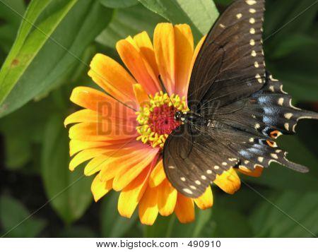 Sunbathing Butterfly