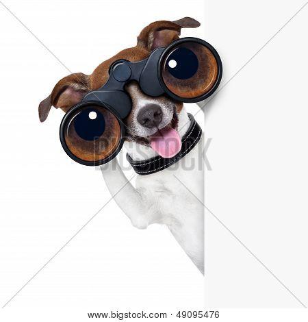 Cão de binóculos