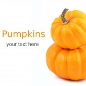 picture of gourds  - Two stacked mini pumpkins over white with sample text - JPG