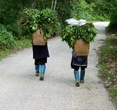 stock photo of hmong  - Hmong women in the moutains of Sapa - JPG