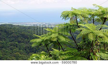 Rainforest, Guadeloupe, Caribbean