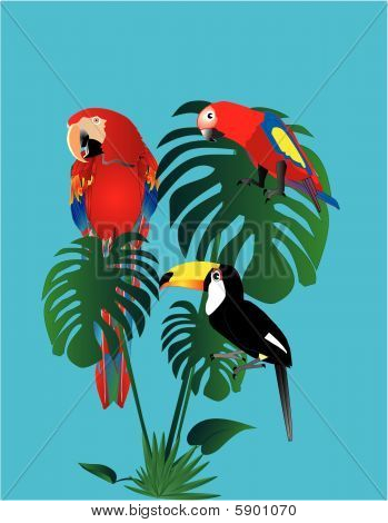 Parrots and tuscan sitting in a rain forest..