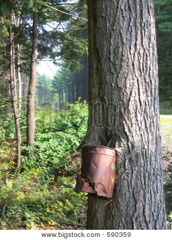 Old Bucket In Tree