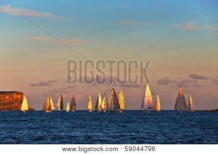 Golden sunlight on yachts entering Sydney Harbour