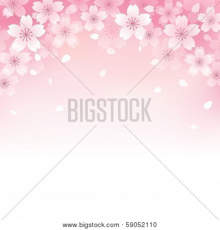 Beautiful Cherry Blossom Background