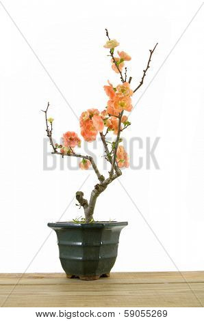 branch of blossoming apple tree in vase on mat