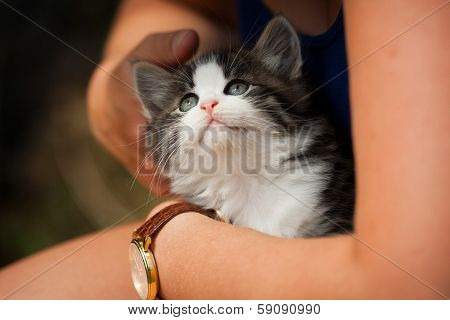 Cat being Hugged