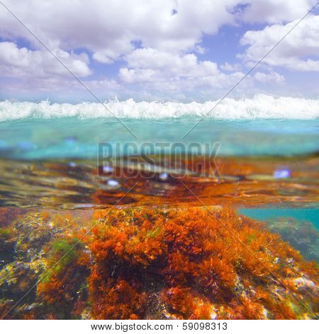 Mediterranean underwater seaweed algae in Denia Javea Alicante spain