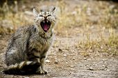 stock photo of growl  - Growling cat in a forest after thunderstorm
