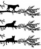 image of leopard  - Set of three editable vector silhouettes of a leopard on a tree branch with leopards as separate objects - JPG