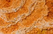 foto of protozoa  - Microbial mat pools close up in  Yellowstone National Park - JPG