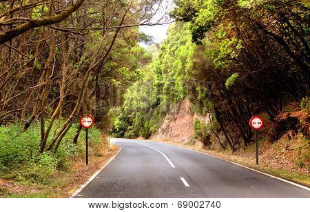 Mountain road in the Garajonay National Park, La Gomera, Spain
