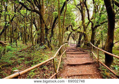 the amazing rain-forest in La Gomera, Parque Nacional de Garajonay, Canary islands, Spain