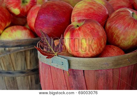 fall apples in basket