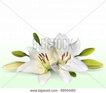 White Easter lily flowers