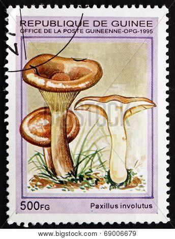 Postage Stamp Guinea 1995 Paxillus Involutus, Mushroom