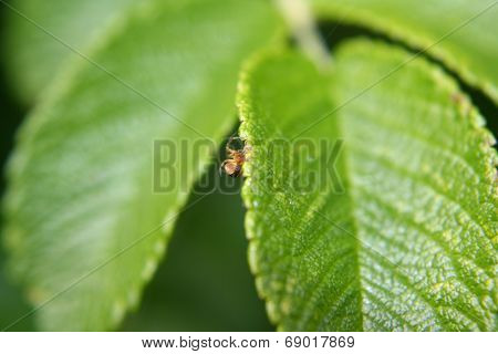 Spiderling on a leaf