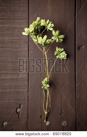 Twig Of Dry Oregano