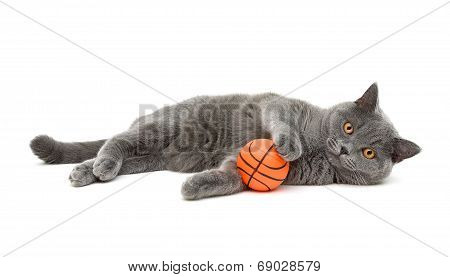 Gray Cat (breed Scottish-straigh) With A Ball On A White Background