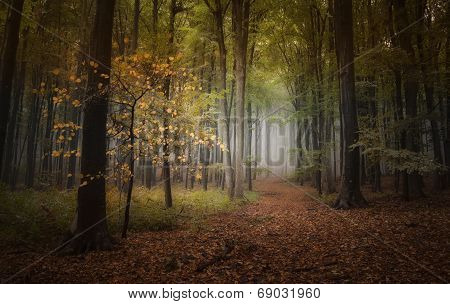 Autumn in a colorful enchanted forest with fog and road