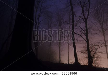 Night in a mysterious forest with fog on Halloween
