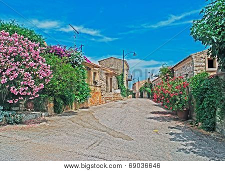 Narrow Street With Flowers