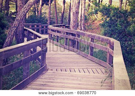 Boardwalk In The Wood