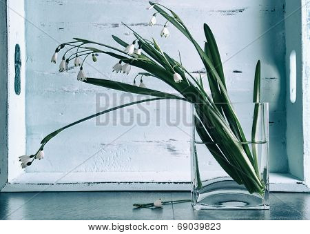 Winter Snowdrops In Square Glass Vase Against Aqua Blue Vintage Tray On Kitchen Black Slate Counter