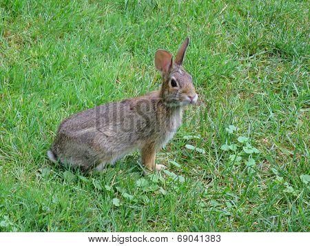 Listening Rabbit