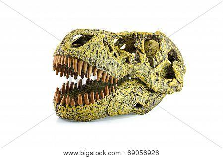 Tyrannosaurus fossil head toy isolated on white