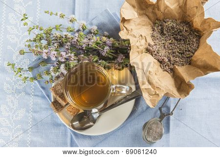 Mentha Pulegium Infusion