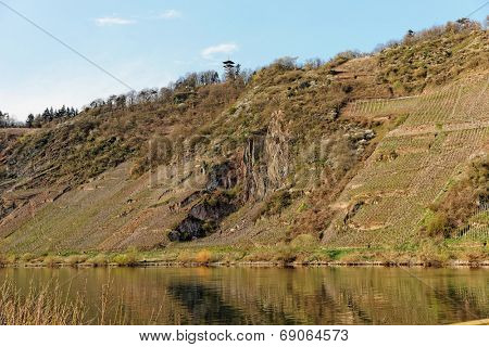 Steep vineyard slopes in Punderich, Moselle river, Germany