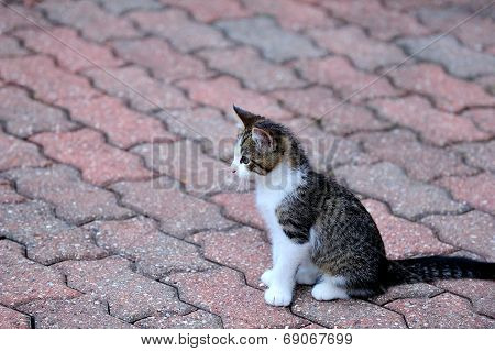 Kitten on bricks