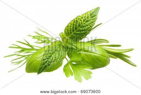 Herbs. Basil leaves, dill herb, rosemary spice, mint isolated on white background.