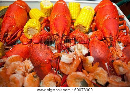 Boiled American Lobsters