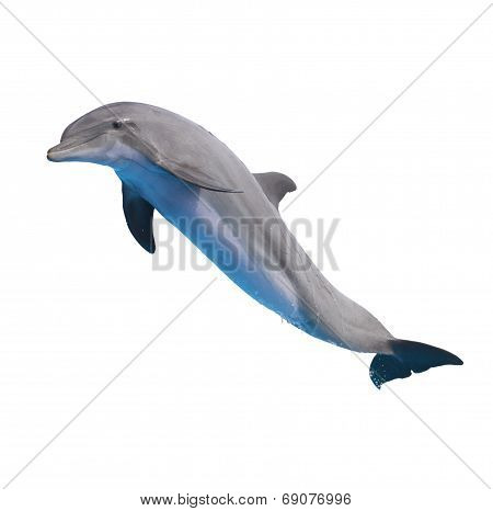 jumping dolphin on white