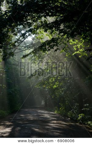 Ground road crossing forest with beams of light