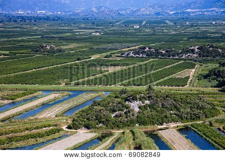 Vineyard In Croatia