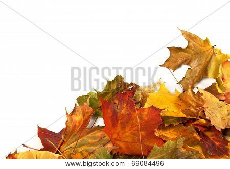 Autumn Maple Leafs At Corner