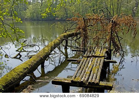 old overgrown footbridge