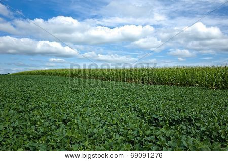 Corn and Soybeans