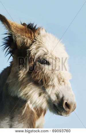 Closeup of a donkey against clear sky