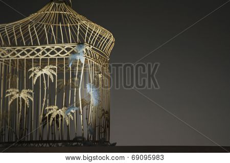 Feathers Stuck on Empty Birdcage