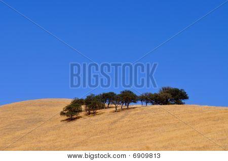 Bäume auf Hill sehr blue sky