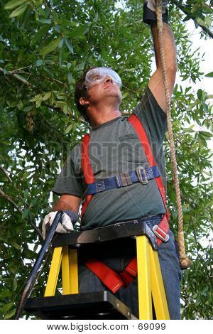 Tree Surgeon In Safety Harness