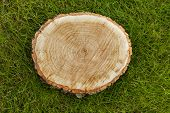 pic of disafforestation  - tree stump on the green grass - JPG