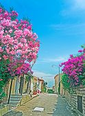 pic of oleander  - narrow street with oleanders in San Pantaleo Sardinia - JPG