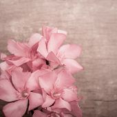 foto of oleander  - Pink oleander flowers close up on wooden background - JPG