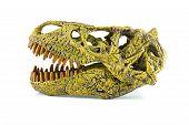 picture of tyrannosaurus  - Tyrannosaurus fossil head toy isolated on white - JPG