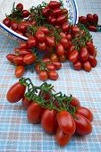 foto of plum tomato  - Cherry tomato  - JPG